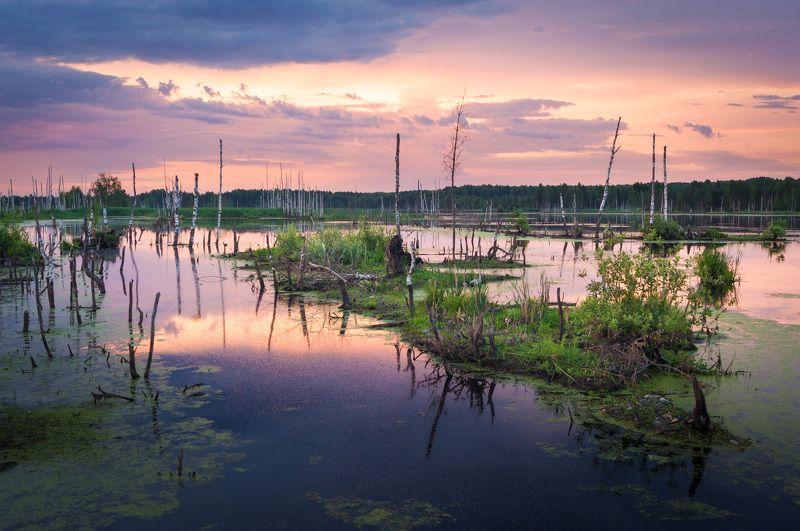 туман, московская область, утро, природа, пейзаж, лето, рассвет, солнце, болото Утро на болотеphoto preview