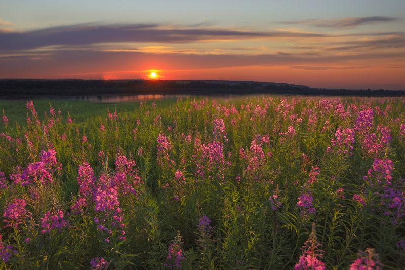 Когда цветет Иван-чайphoto preview