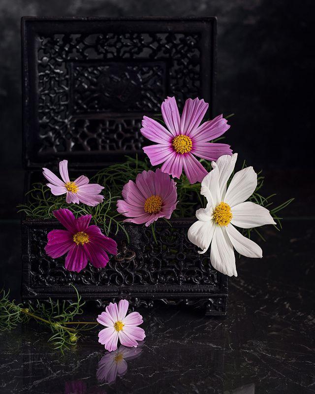 космея натюрморт цветы фотонатюрморт   Космеи photo preview