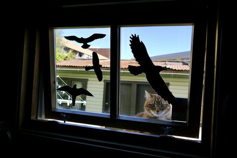 Animals, fauna, cats, nature, house, boat, eyes, animals portrait, window, fence, кошки,  Кошкин домphoto preview