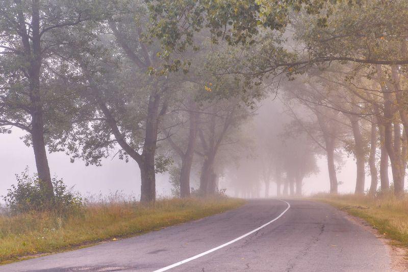 август, аллея, беларусь, дорога, лето, рассвет, тополя, туман, утро Утром августа, старыми дорогамиphoto preview