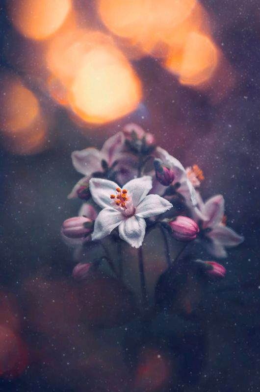 макро, цветы, flowers, macro Дейцияphoto preview