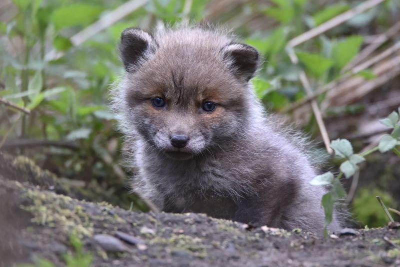 лес,животные,лисёнок лисёнокphoto preview