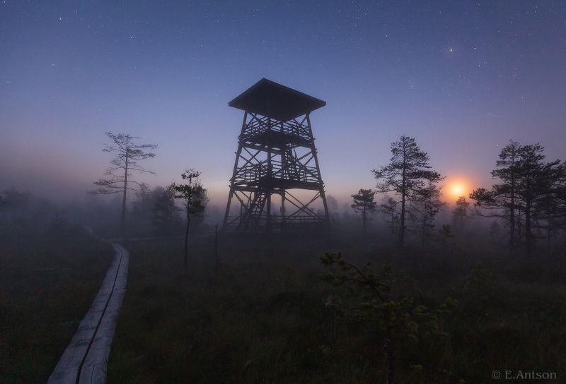 пейзаж, природа, ночь, болото, эстония Ночная атмосфера фото превью