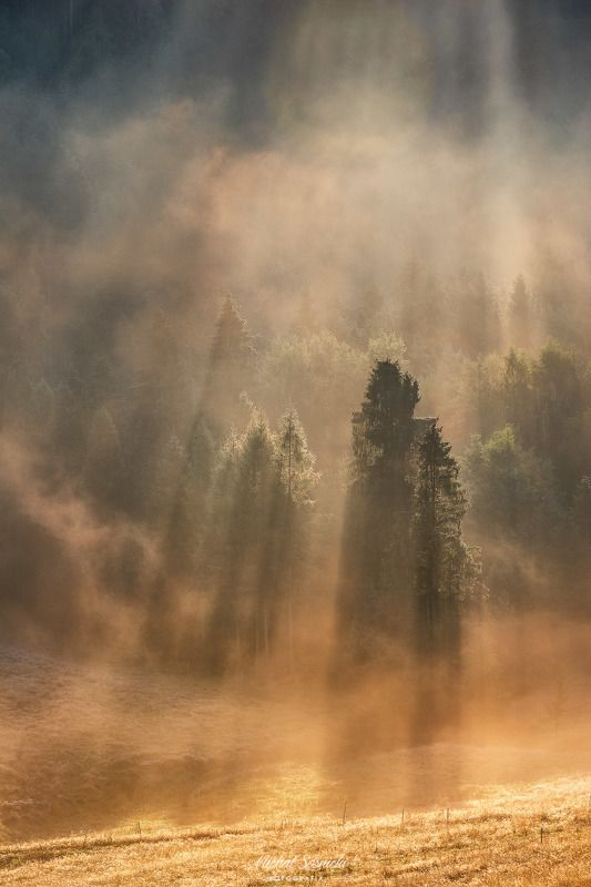 #tree #laser #fog #foggy #wood #nature #amazing #earth #pics #photo #best #poland Tree...photo preview