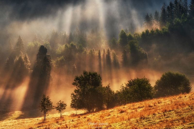 #tree #laser #fog #foggy #wood #nature #amazing #earth #pics #photo #best #poland Happy morning...photo preview