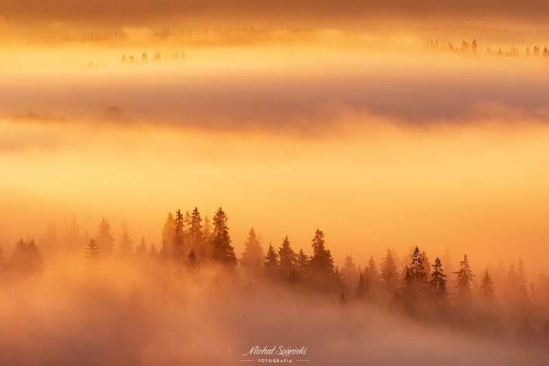 #tree #laser #fog #foggy #wood #nature #amazing #earth #pics #photo #best #poland Trees...photo preview