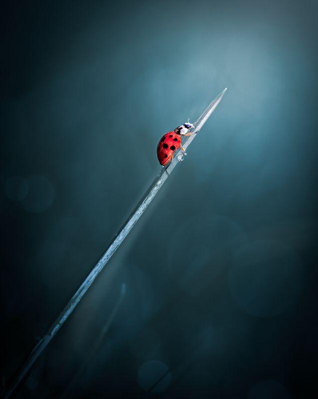insect, beetle, ladybird, ladybug, macro, grass, rain, water, blade, droplet, dusk, dawn, sunset, art, artistic Life's journeyphoto preview