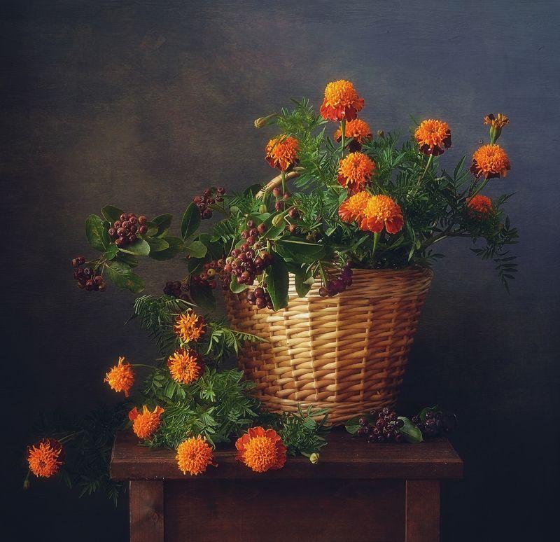 натюрморт,лето,бархатцы,цветы,арония,ягоды,черноплодка с бархатцами и аронией... фото превью