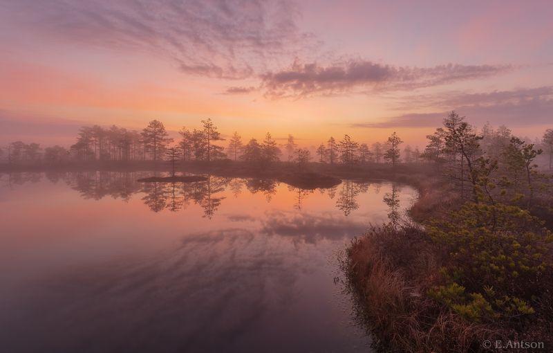 пейзаж, природа, рассвет, эстония, болото, туман Туманный восход фото превью