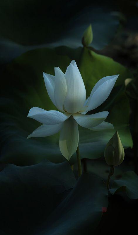 Lotus #9photo preview