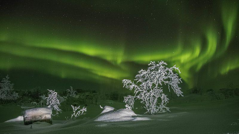 Ночь, Северное сияние Ветка к веткеphoto preview