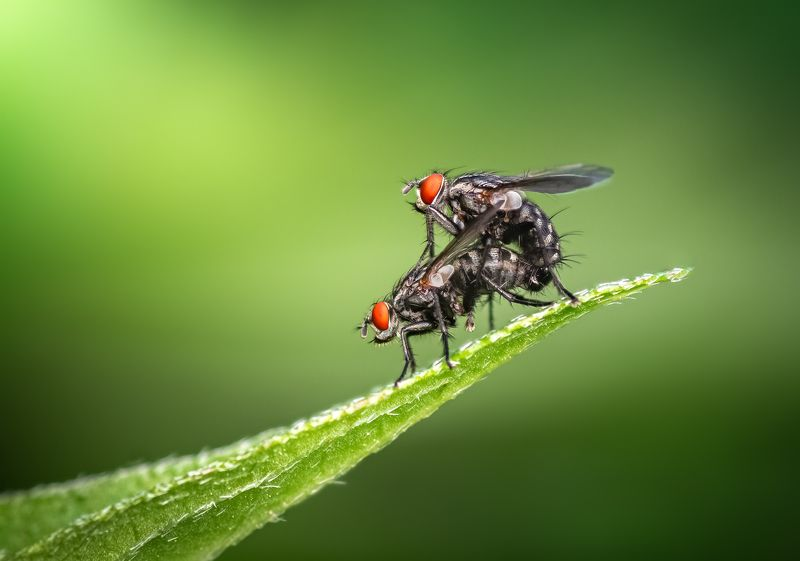 insect, leaf, fly, mating, love, macro, nature, wild Spring of lovephoto preview