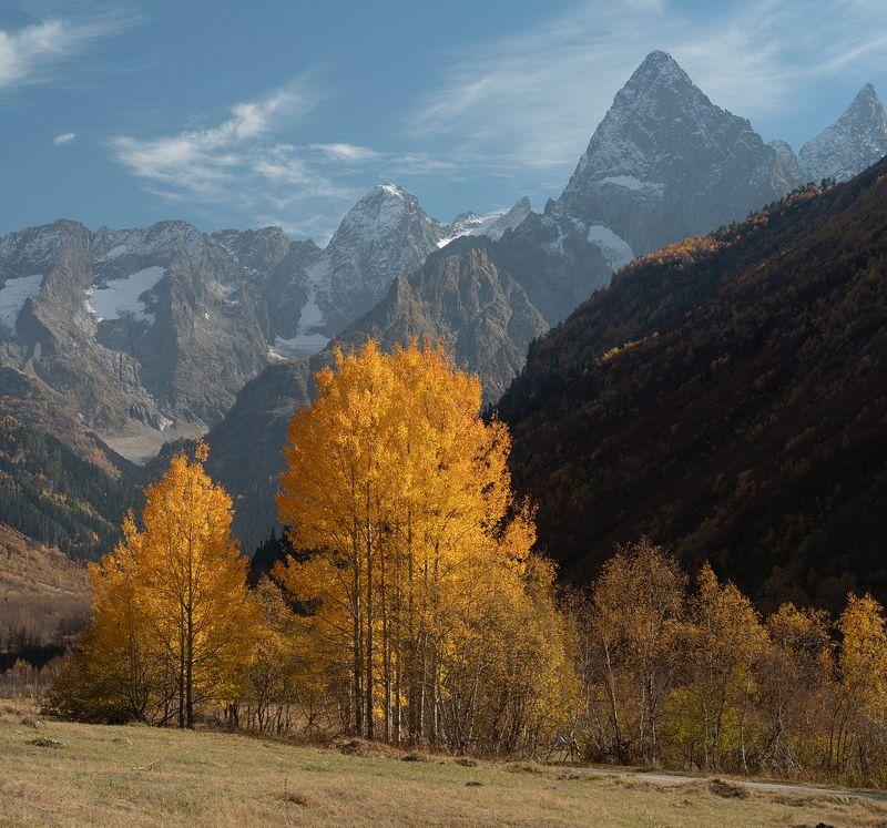 гора, небо, плато, облака, утро, тучи, домбай , осень, дерево, ущелье ОСЕНЬ В ГОНАЧХИРСКОМ УЩЕЛЬЕphoto preview