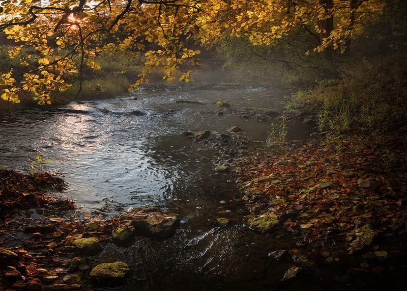 лес, свет, утро, природа р. Крушма, Тульская обл.photo preview