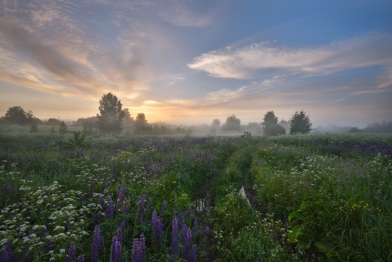 лето,утро,рассвет,туман,солнце,небо,облака,цветы.дорога,деревня по утренней росеphoto preview