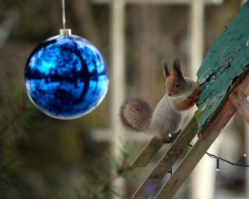В ожидании праздника! или куда же ты,мерзкий фотограф,мои праздничные орехи заныкал...photo preview