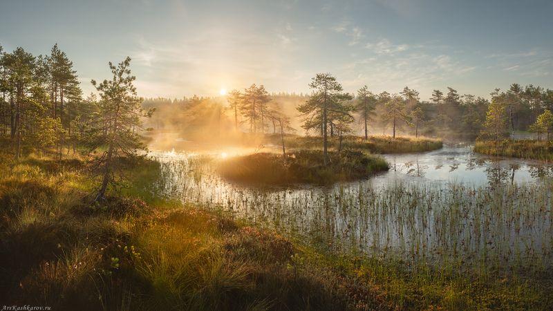 болото, болотные топи, ленобласть, ленинградская область, острова, сосны, туман \