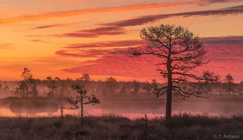 пейзаж, природа, болото, рассвет Осенний рассвет на болотах фото превью