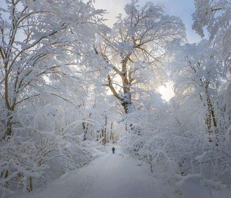 зима, снег, лес, ставропольский край, ставрополье, бештаугорский, бештау, дорога, турист, путешественник, снежное, снежный лес, В снежном царствеphoto preview