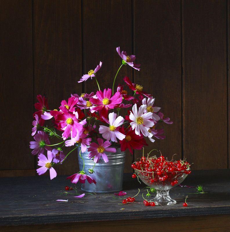 натюрморт, фотонатюрморт, цветы, космея, ягода,  наталья казанцева Лета краскиphoto preview