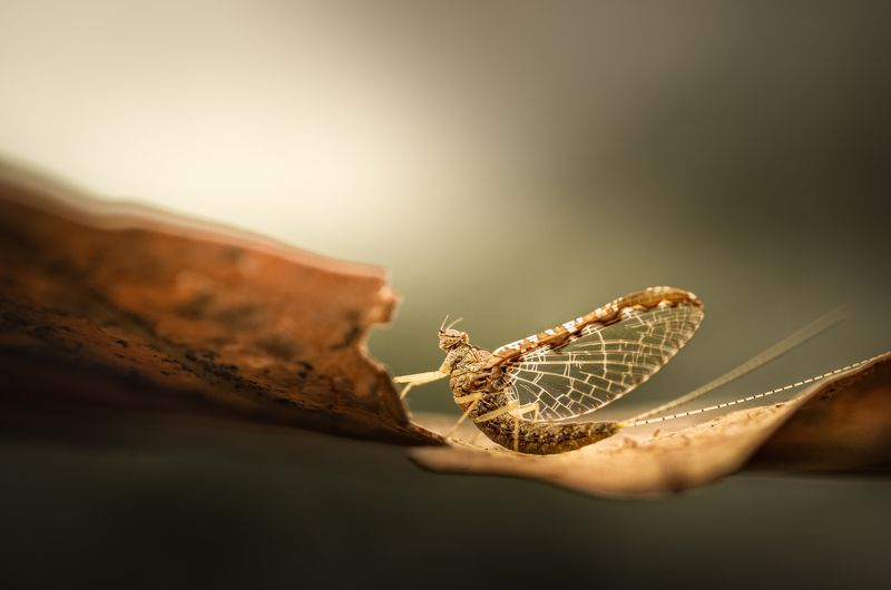 insect, mayfly, leaf, autumn, fall, nature, sunrise, morning, sunset, light, dawn, bug, bugs, insects, wild, Catch a breakphoto preview