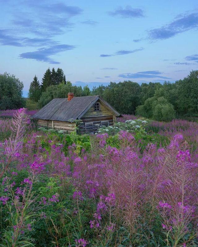деревня. пейзаж. природа, цветы, иванчай Забытоеphoto preview
