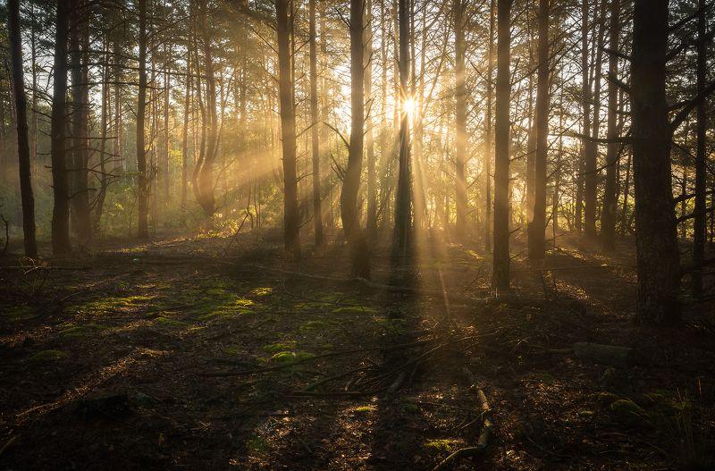 Рассвет в лесуphoto preview