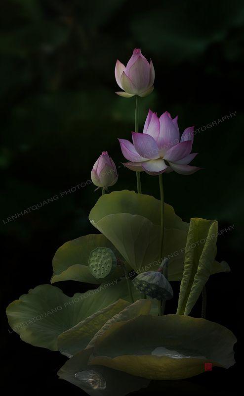 Lotus @9photo preview