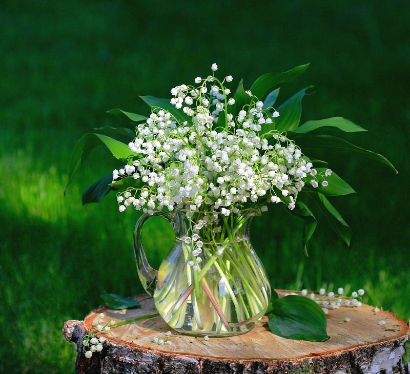 натюрморт, фотонатюрморт, лето, ландыши, цветы, наталья казанцева Кажется, совсем недавно...photo preview