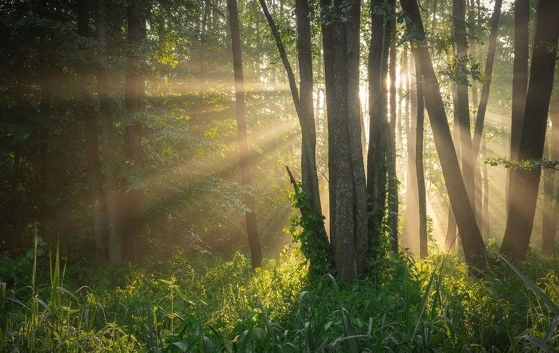 В лучах утреннего солнцаphoto preview