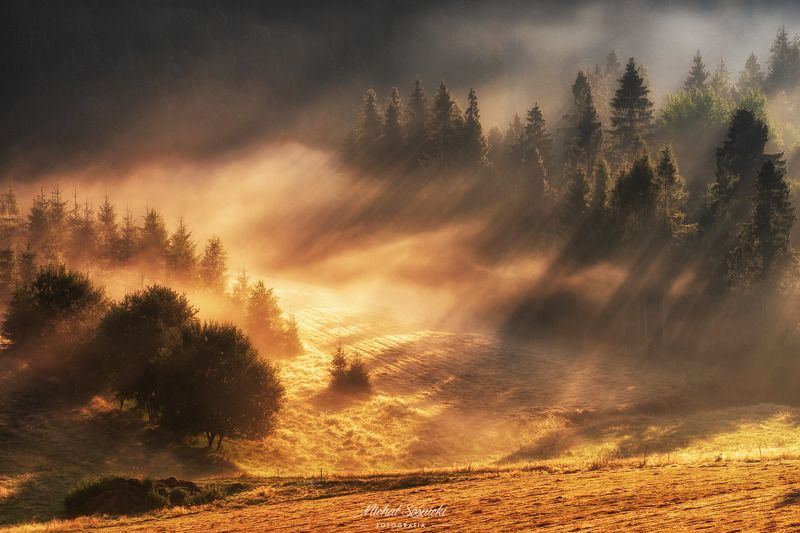 #tree #laser #fog #foggy #wood #nature #amazing #earth #pics #photo #best #poland Foggy morning...photo preview