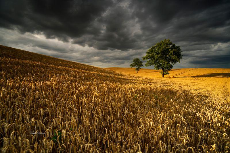 field, landscape, clouds, grain, harvest, ears, tree, Painted Field.photo preview