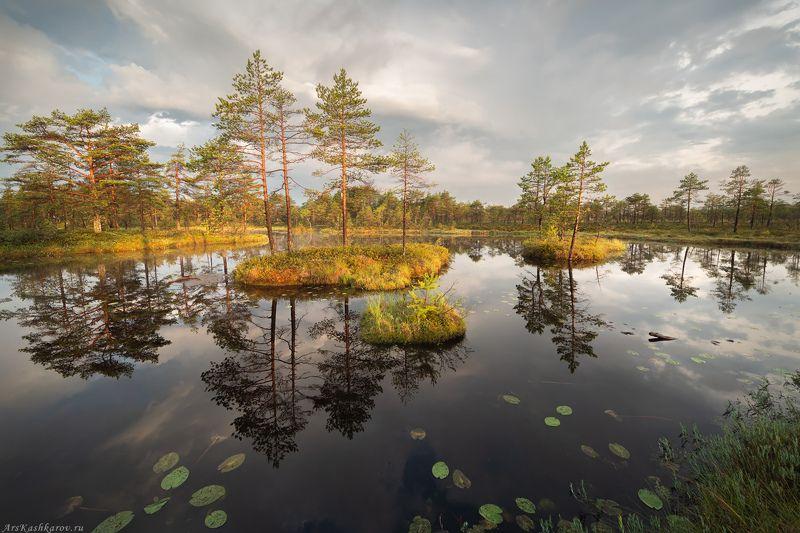 болото, ленобласть, ленинградская область, острова, сосны, утро \