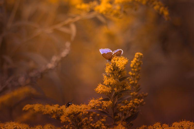 природа, лес, поля, огороды, животные, птицы, макро Осень на порогеphoto preview