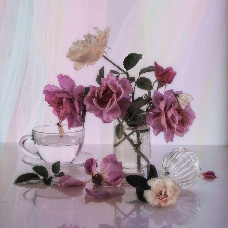 Розы цвЕта сирениphoto preview