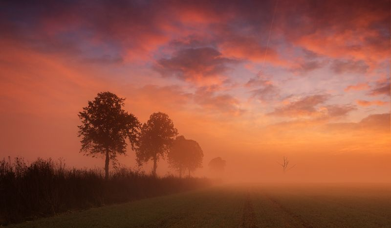 sunrise, fields, morning, mist, tree, abadoned, old, clouds, red, sky Tree\'sphoto preview