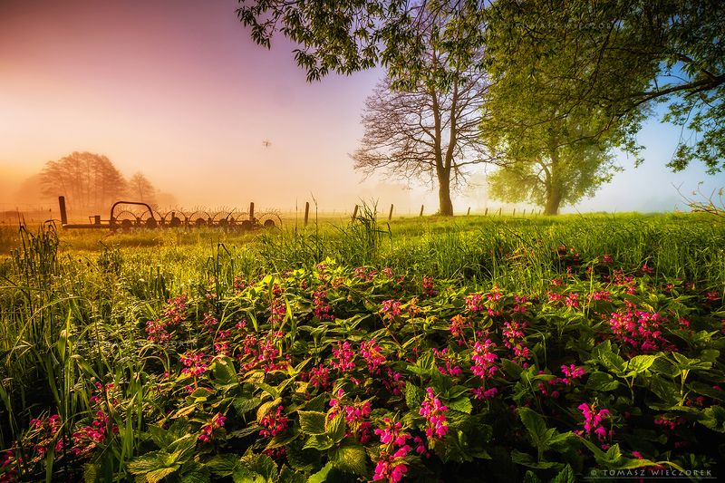 landscape, poland, light, summer, awesome, amazing, sunrise, sunset, lovely, nature, travel, countryside, flowers, insect, colors, fog, mist, mood A second in the life of an insect фото превью