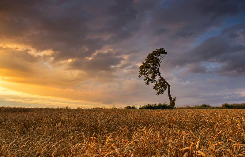 sunshine, fields, night, mist, tree, abadoned, old, clouds, red, sky Созревание хлебаphoto preview
