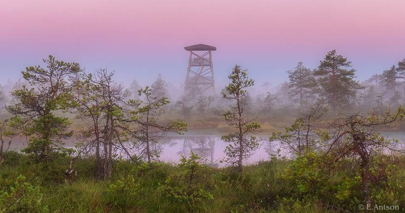 пейзаж, природа, болото, рассвет Туманное утро на болоте фото превью