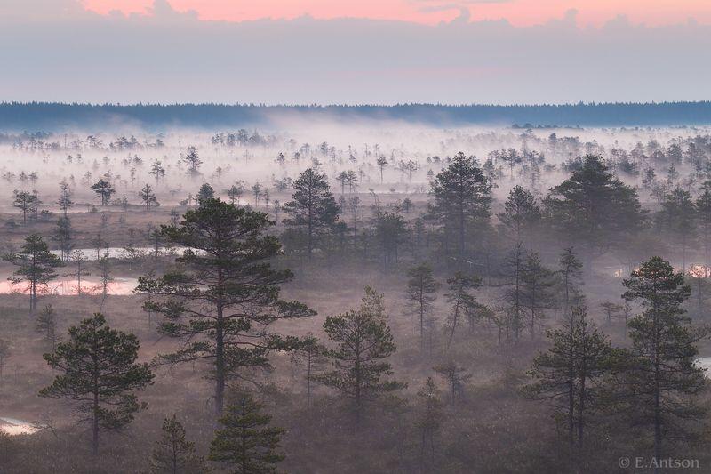 пейзаж, природа, болото, эстония Туманное болото фото превью