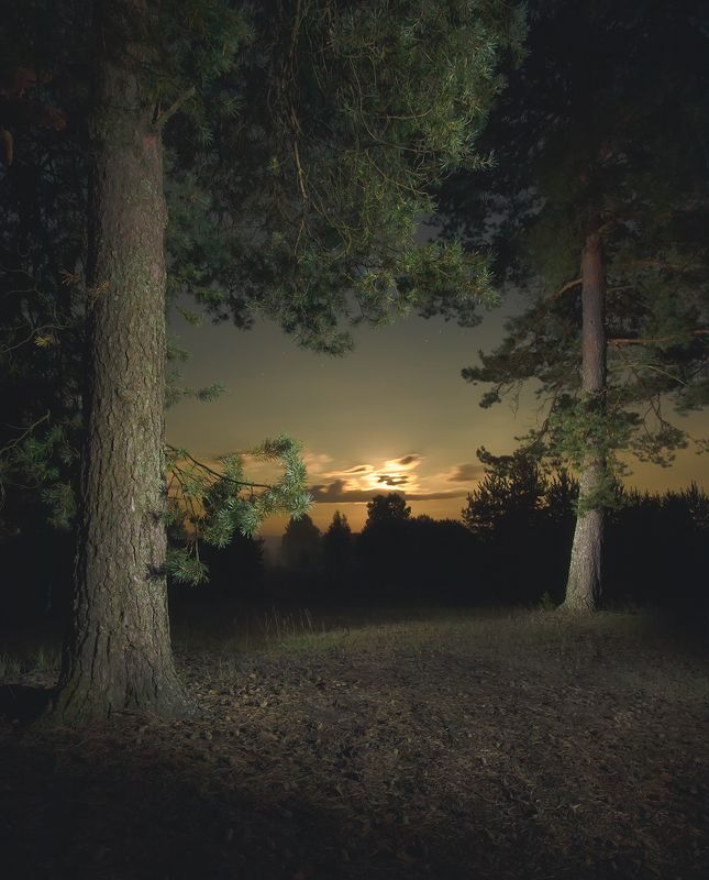 Лунная ночьphoto preview