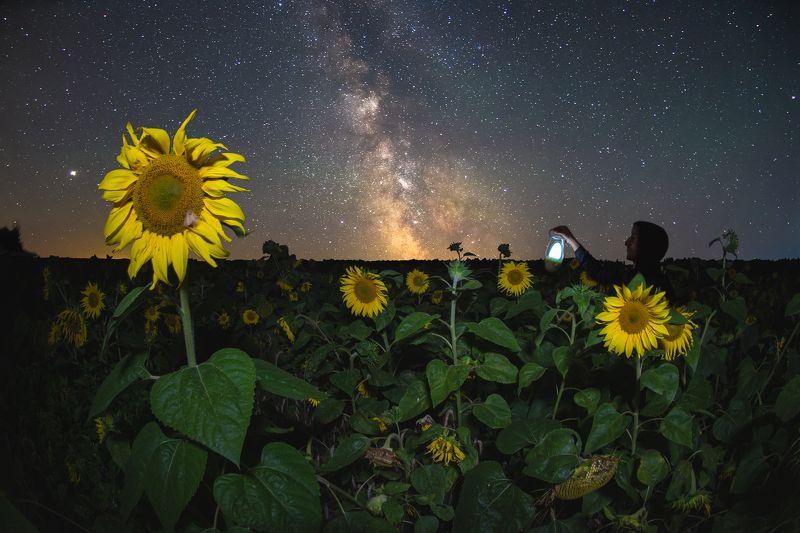 Звёздной ночьюphoto preview