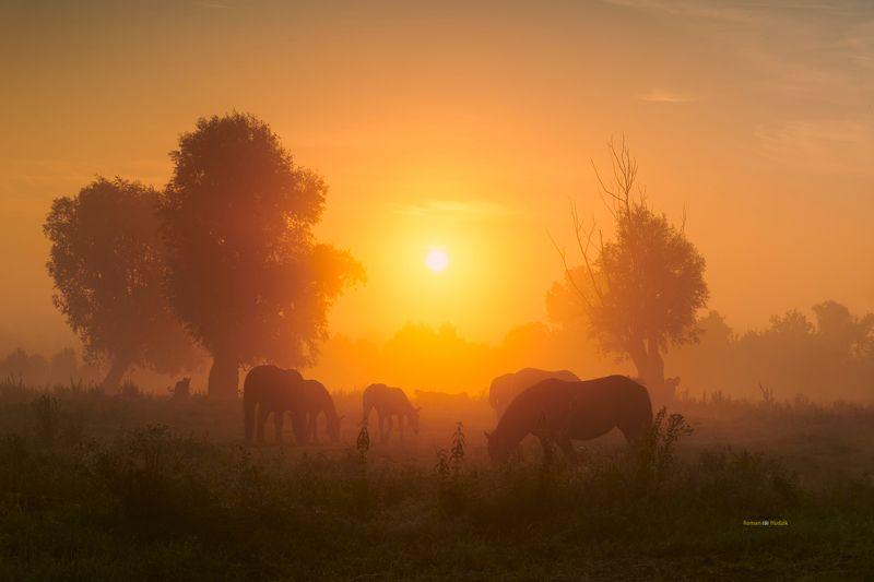 Horses, landscape, sunrise, fog, clouds, orange color, trees, The horses. photo preview