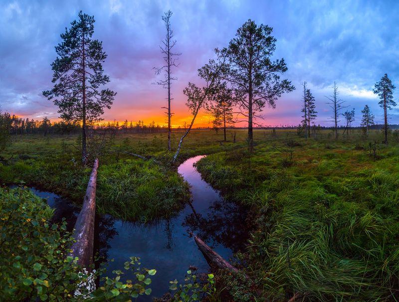 ленинградская область, рассвет, лето, сосны, заря, закат, небо, красочное, дерево, озеро, на берегу, водоём, река, отражение, утро, облака, цветы, цветение, луг, Вся магия летаphoto preview