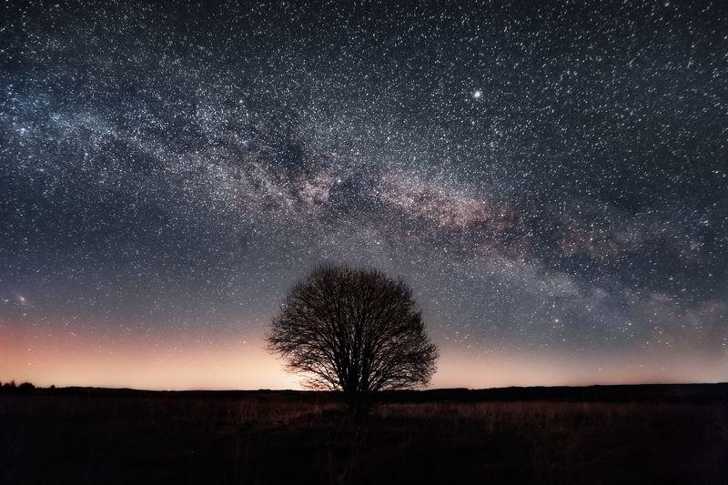 Дерево и Млечный путьphoto preview