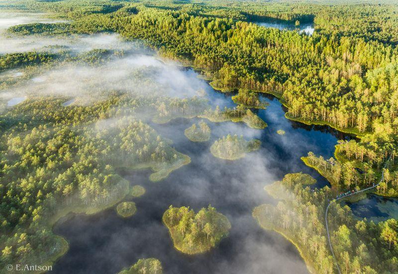 пейзаж, природа, болото, озеро, эстония Дыхание болота фото превью