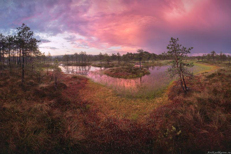 болото, болотные топи, ленобласть, ленинградская область, острова, сосны, восход \