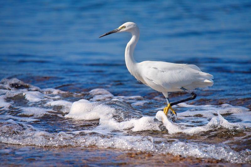 Белая цапля у синего моряphoto preview
