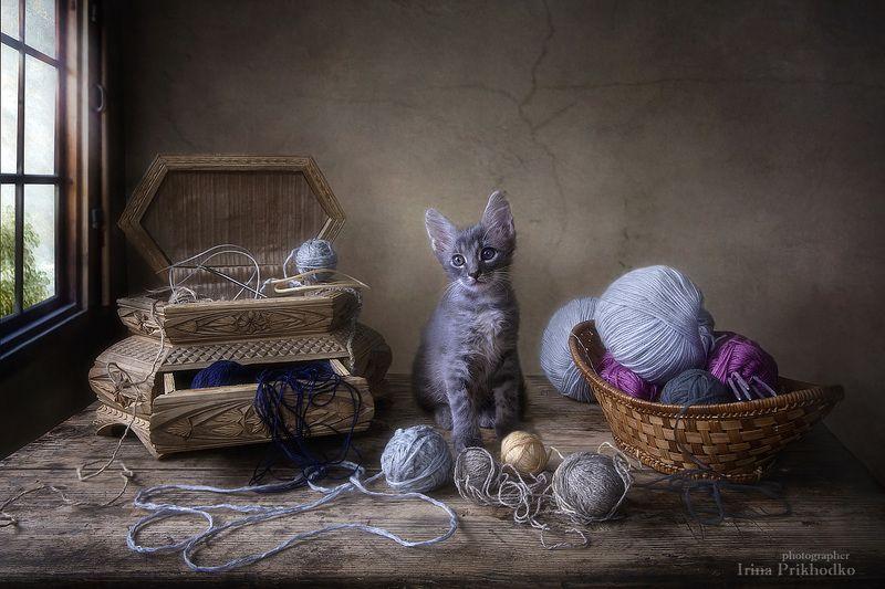 постановочное фото, котонатюрморт, натюрморт, домашние животные, котенок Илька,  Наигрался...photo preview